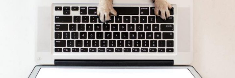 business-dog-paws-on-keyboard_720x
